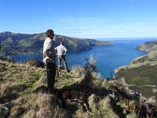 Roger Beattie and Gus Liddle surveying Banks Peninsula