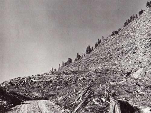 OLDcypre-hillside-(Steltzer-and-Kerr).jpg