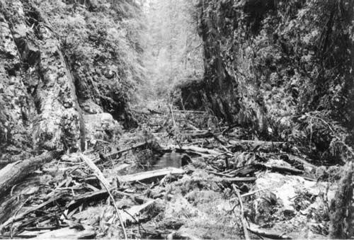 OLDDown-stream-yarding-1970-Kauwinch-2.jpg