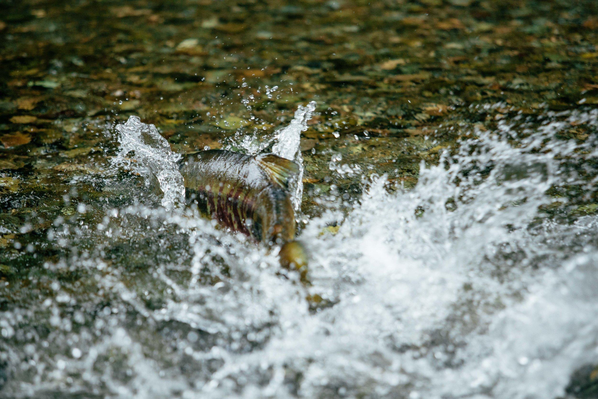 - Chenatha River