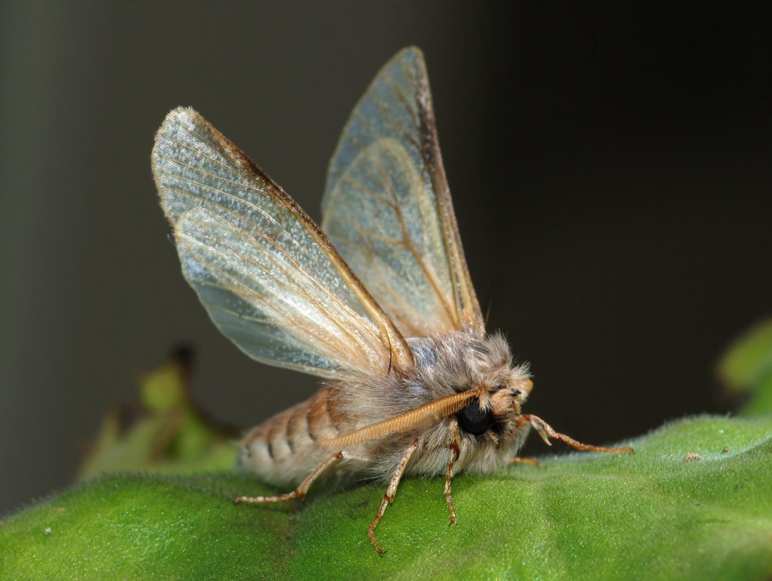Moth_September_2008-3.jpg