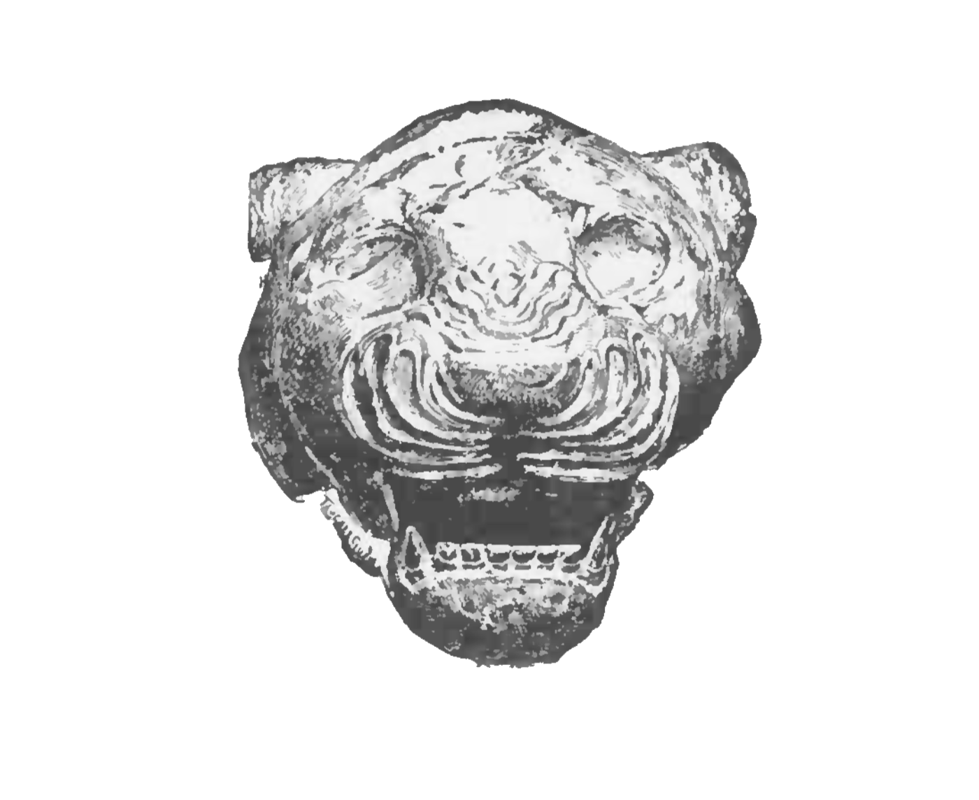 Chaldean_Head of a Lion.png