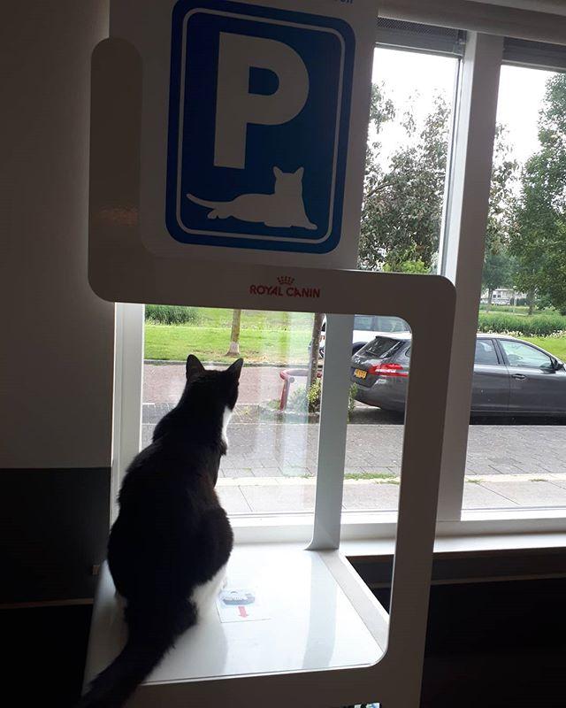 Hee kijk! Een katten parkeerplaats, kan ik mooi naar buiten kijken!😁🐱 #dierenkliniek #zoektbaasje #3poten #heellief #katten #cats #westwijk #dieren #opname #lekkerzitten #buitenkijken #katze