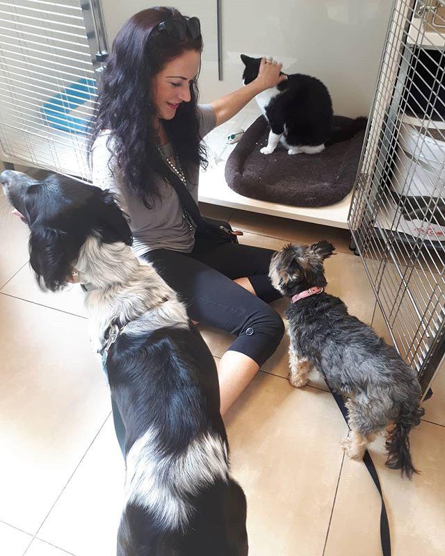 Vandaag is Stefan opgehaald door zijn nieuwe baasje.🐱 heel veel plezier en kattenliefde gewenst. #stefan #westwijk #dierenarts #dierenkliniek #afstandskat #nieuwbaasje #happy #cat #katten #3poten #lief