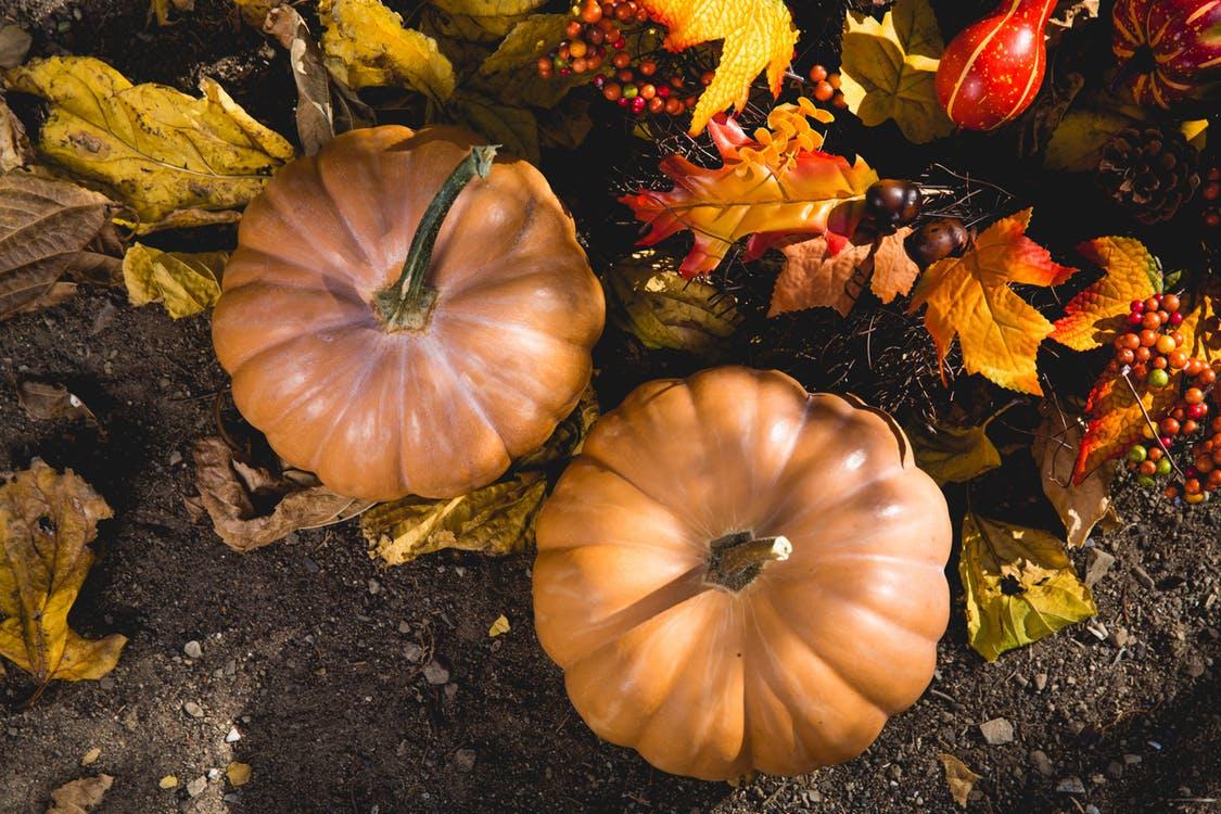 pumpkins thanks.jpg
