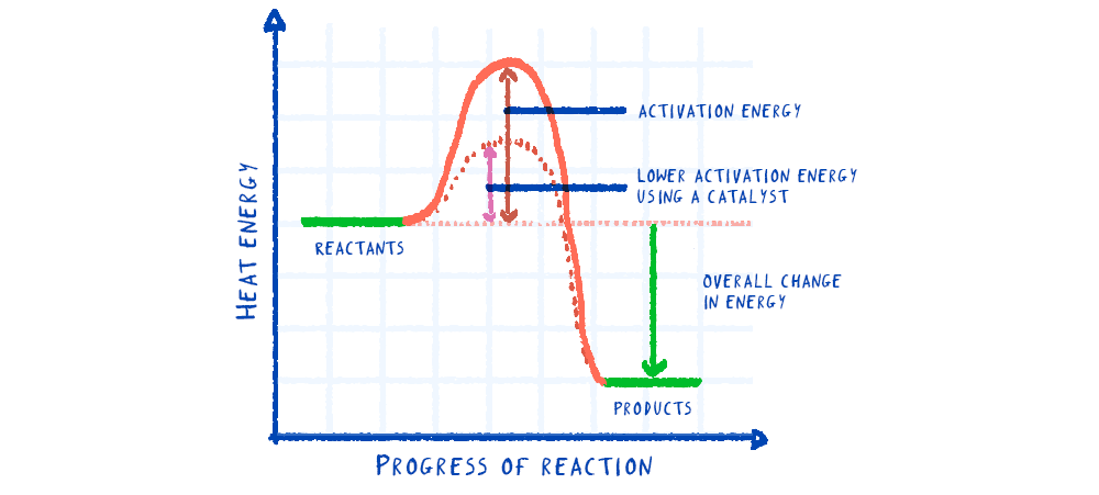 A reaction profile for an exothermic reaction with and without a catalyst