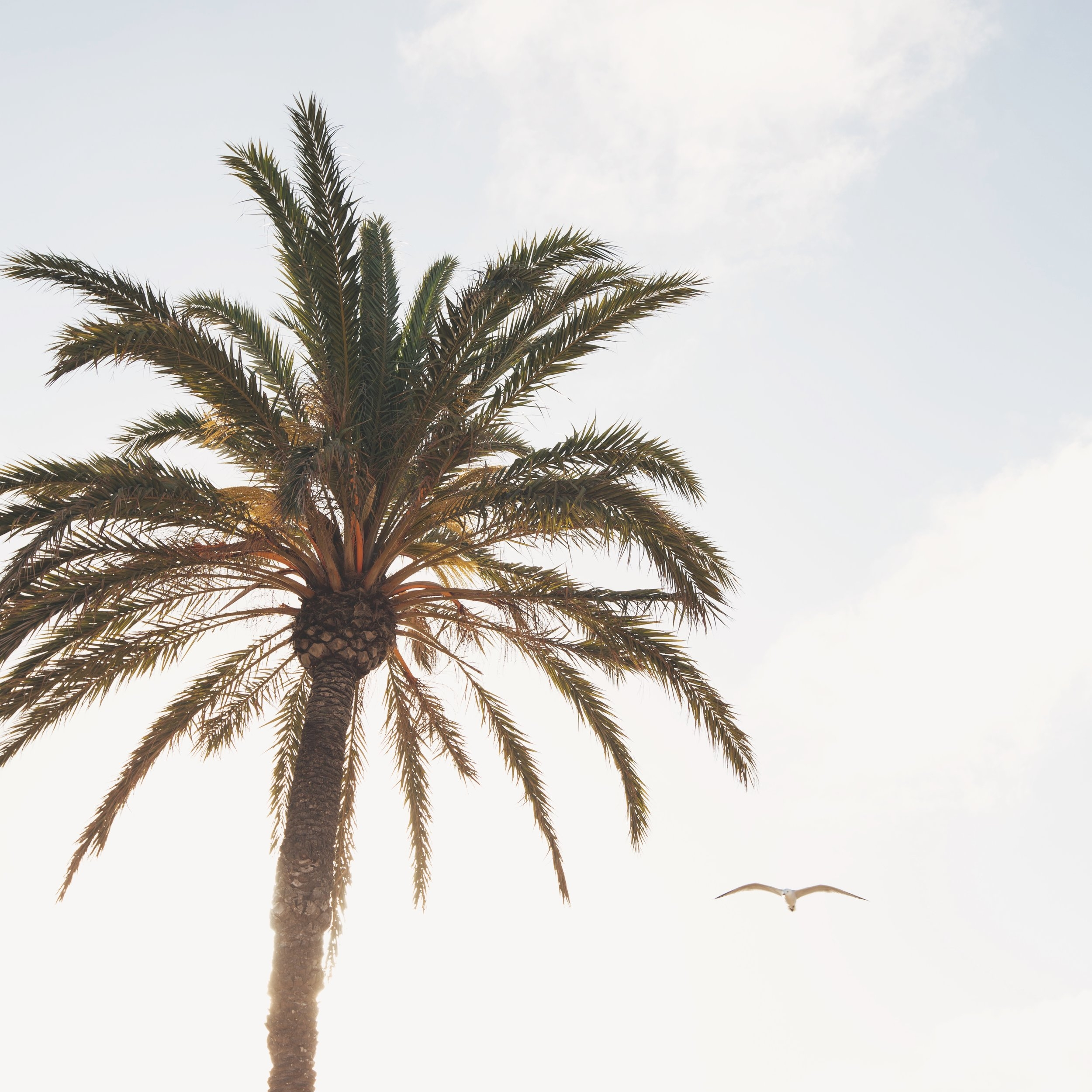 BEACHOUSE 2018-M-DB-029.jpg