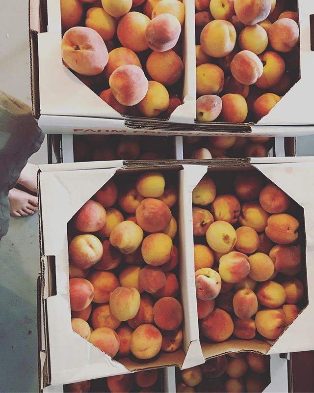 //peaches in the summatime, apples in the fall (well... kinda)// S T U N N I NG// 2nds peaches 🍑✨🍑✨🍑✨🍑a la @mainegrownpeaches in the door today // these make me so so giddy // all the peach pops comin at chya // summer ain't over yet // #knowyourfarmer #poplife #getsticky #smallbatch #knowyourfood #mainegrown #peaches #mainefood #slowfood #prettythings #peachesplz
