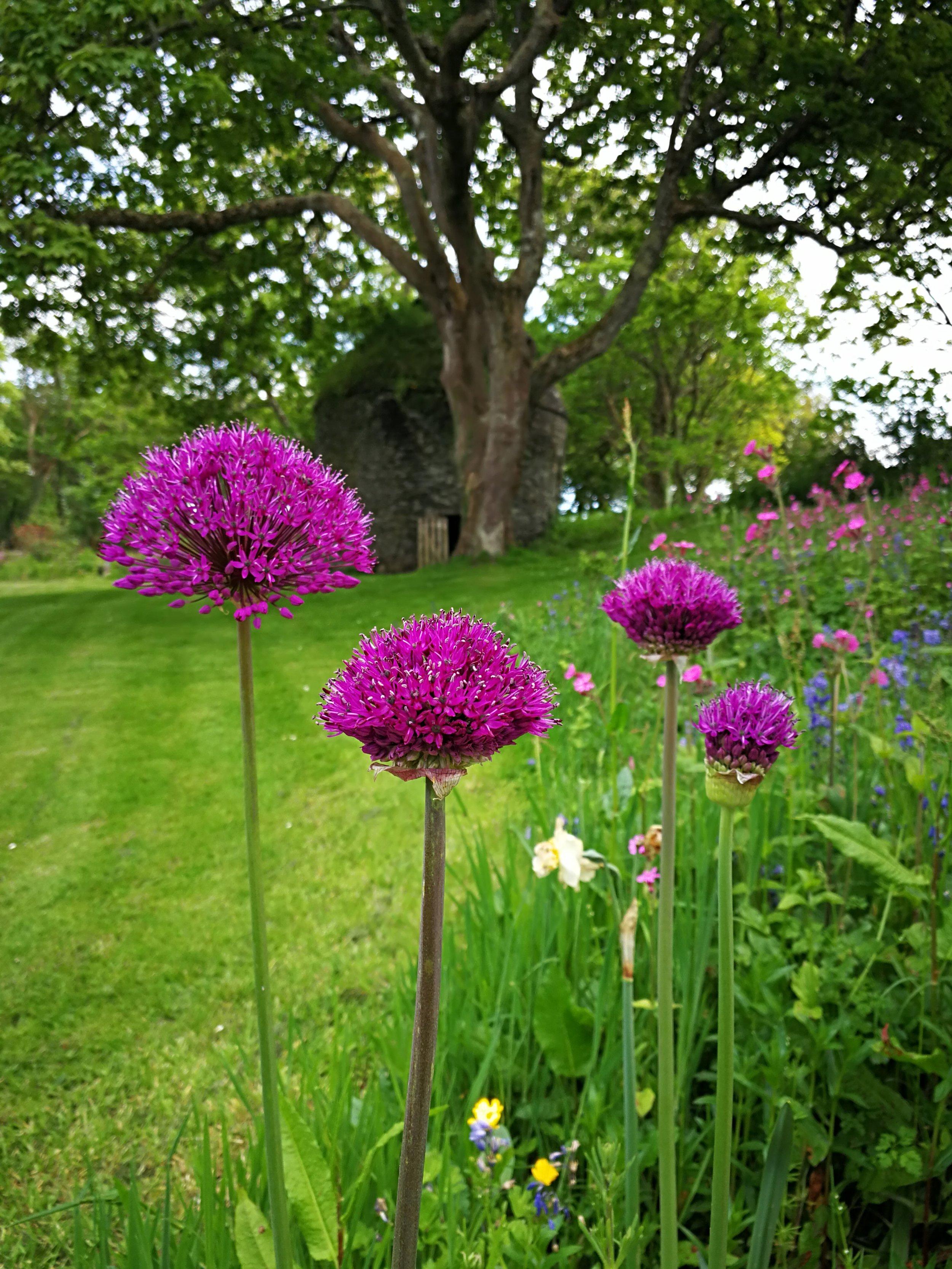 Cornish-Garden.jpg