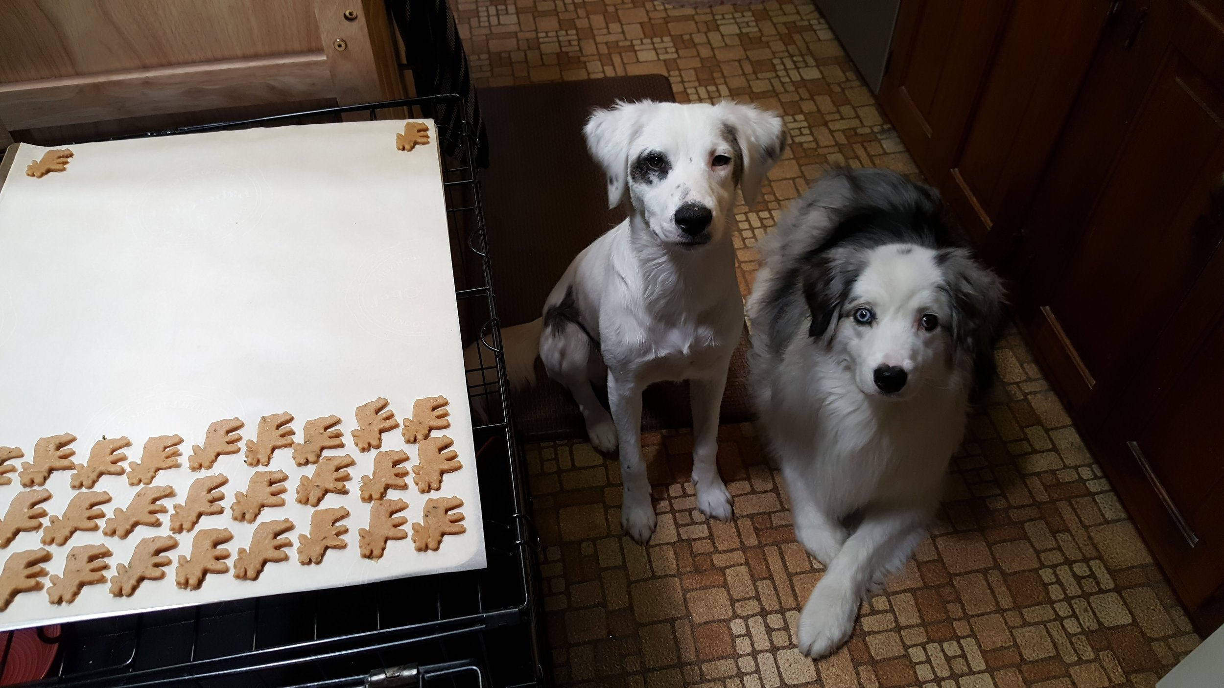 Moose Country Pet Treats_Aussie Approved.jpg