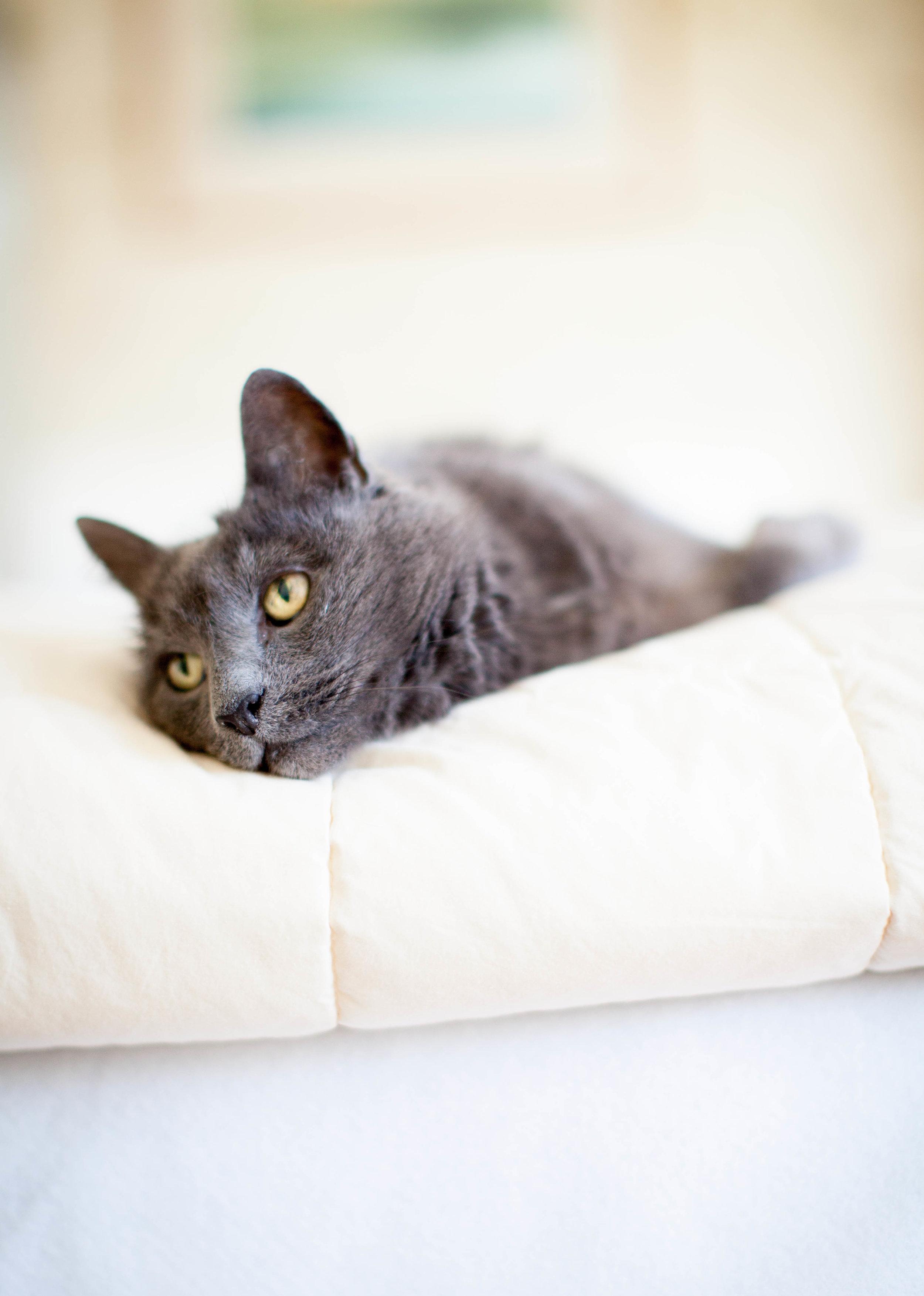 MegaBugPhotography_MooseCountryPetTreats-Cats.jpg
