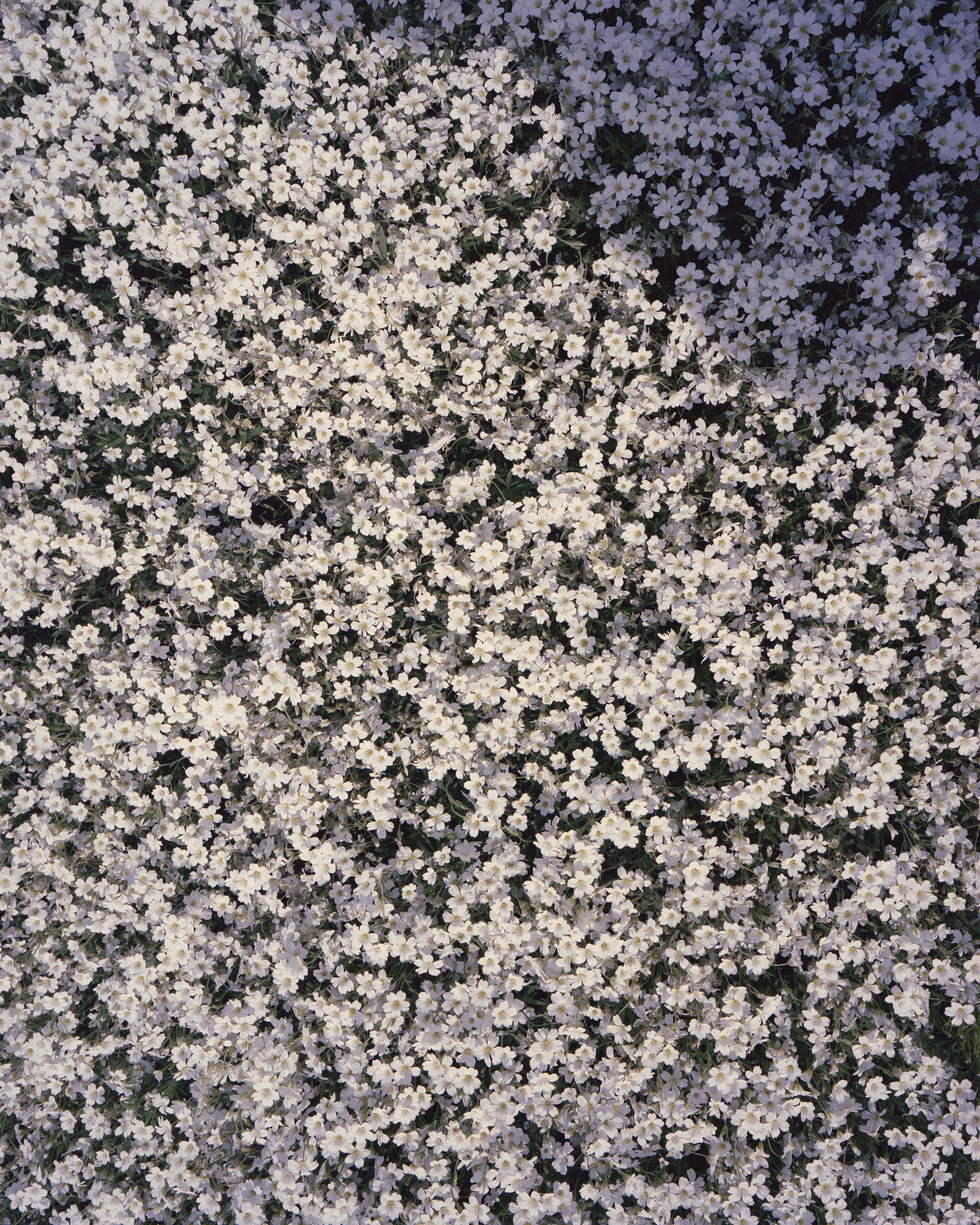 Flowers2_web.jpg