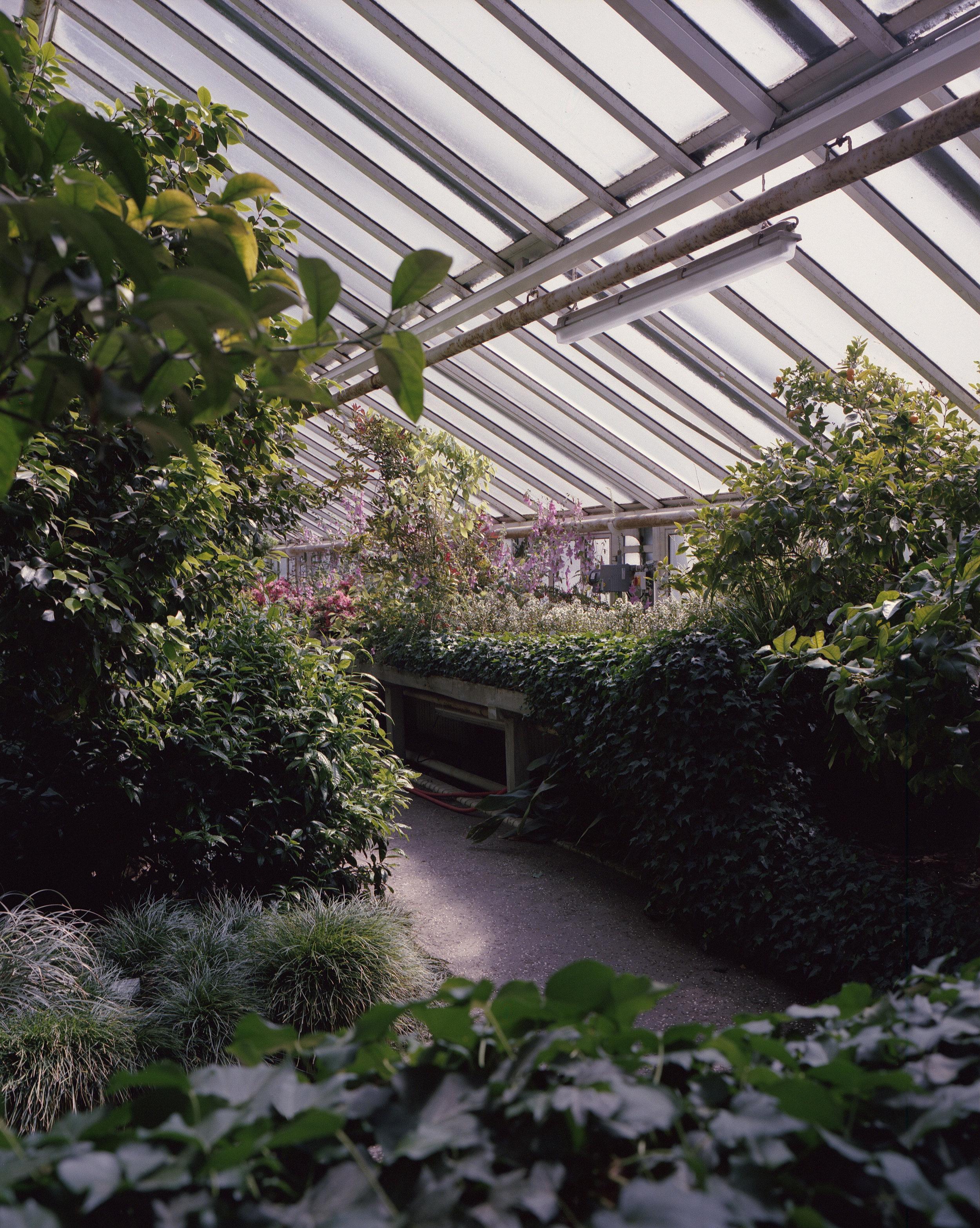 Garden2_web.jpg