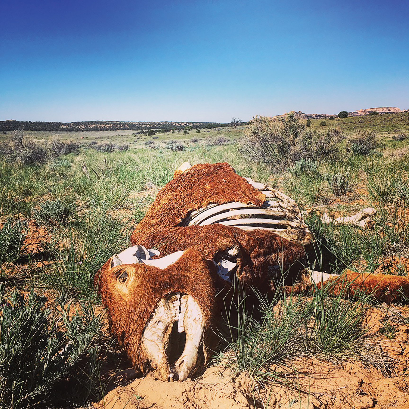 A cow carcass near a scarce water supply. Photo by Ashley Carruth