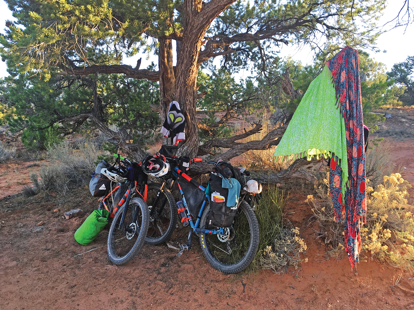 Bikes rest in the shade of a Pinyon Pine. Photo by Ashley Carruth