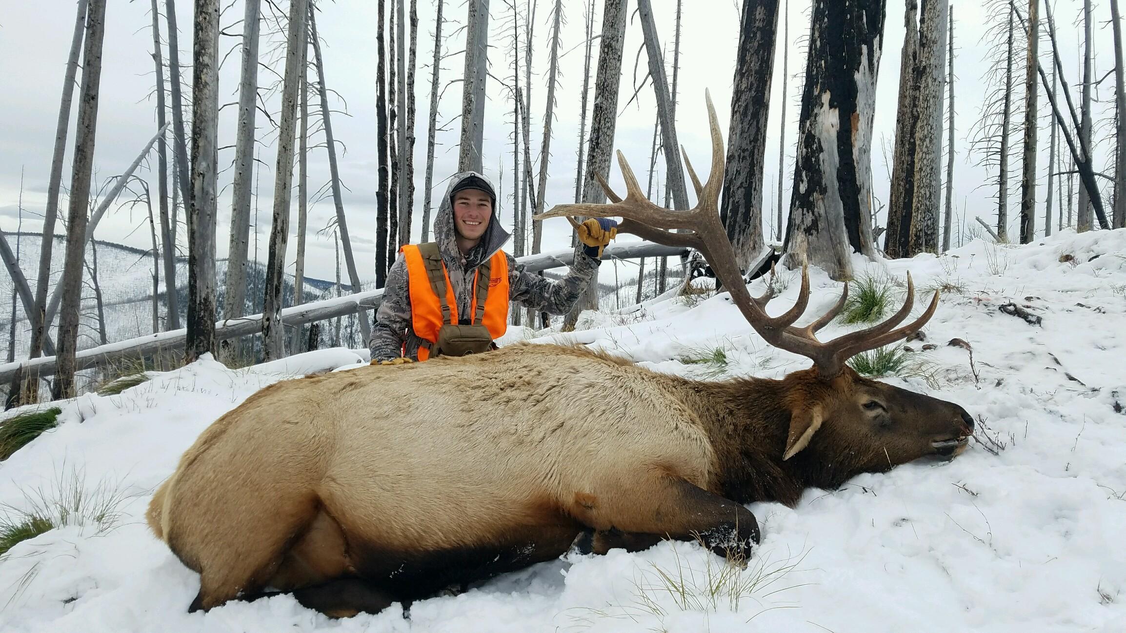 Rifle Elk Hunt Montana