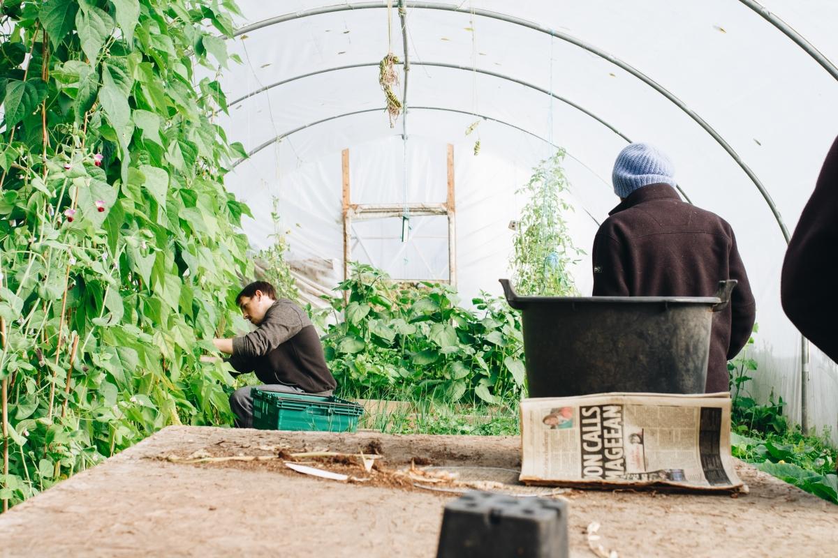 Optimized-adult-agriculture-farm-1084542-1.jpg