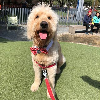 knix the doodle -