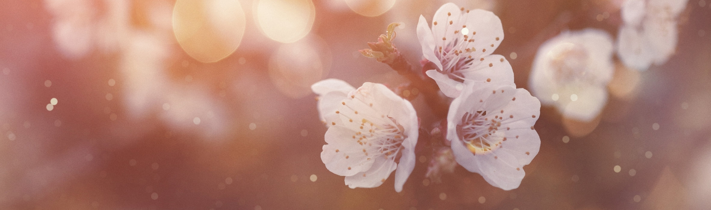flowers-658065546.jpg