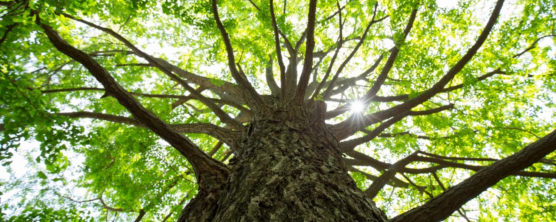 tree-691715314.jpg