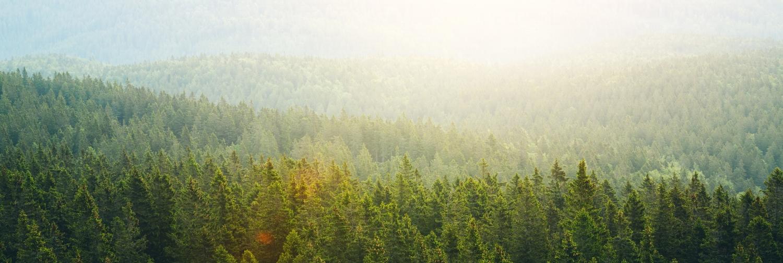 trees-493937990.jpg