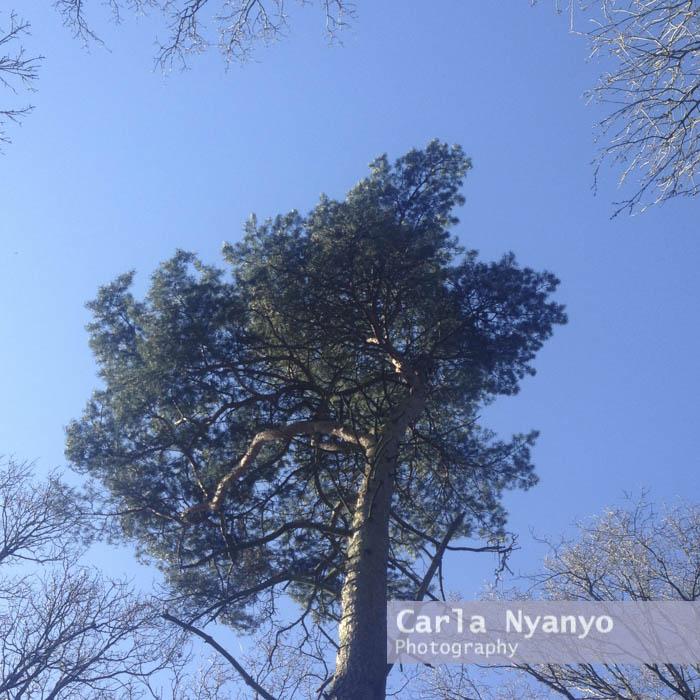 my_sunday_photo-5.jpg