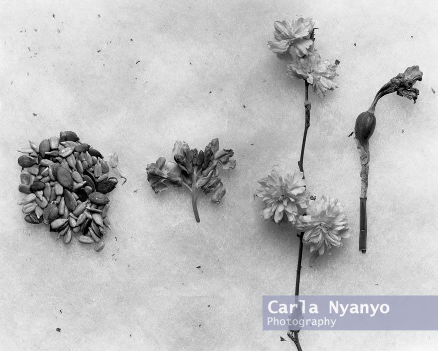 02_flowers_5x4.jpg