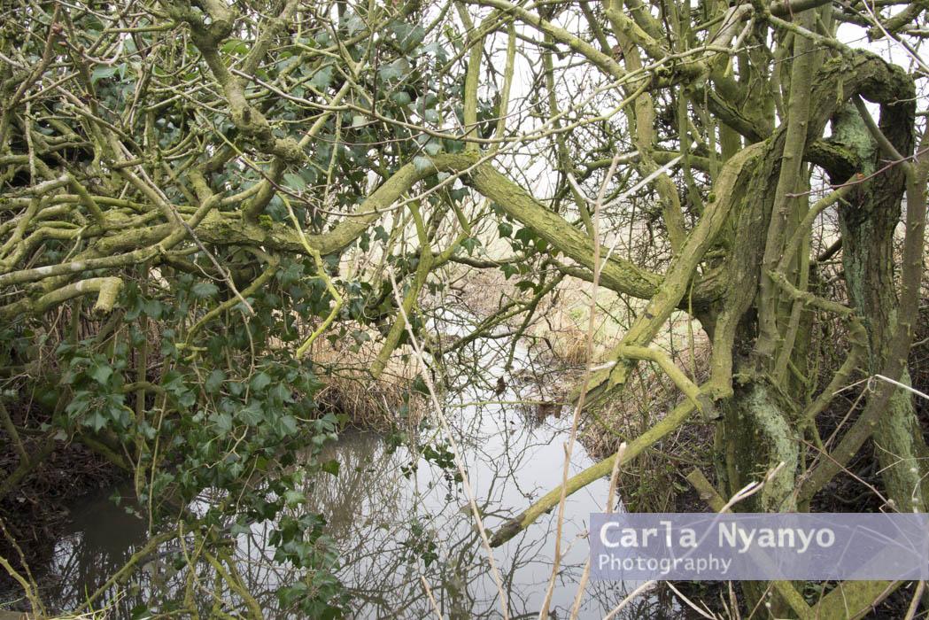 river_sherbourne-20.jpg