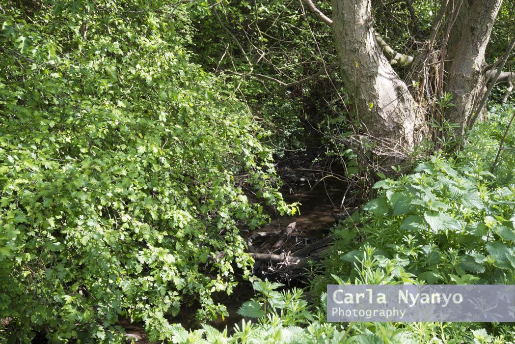 river_sherbourne-128.jpg