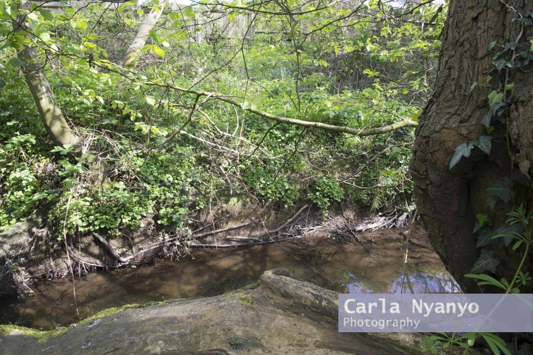 river_sherbourne-134.jpg