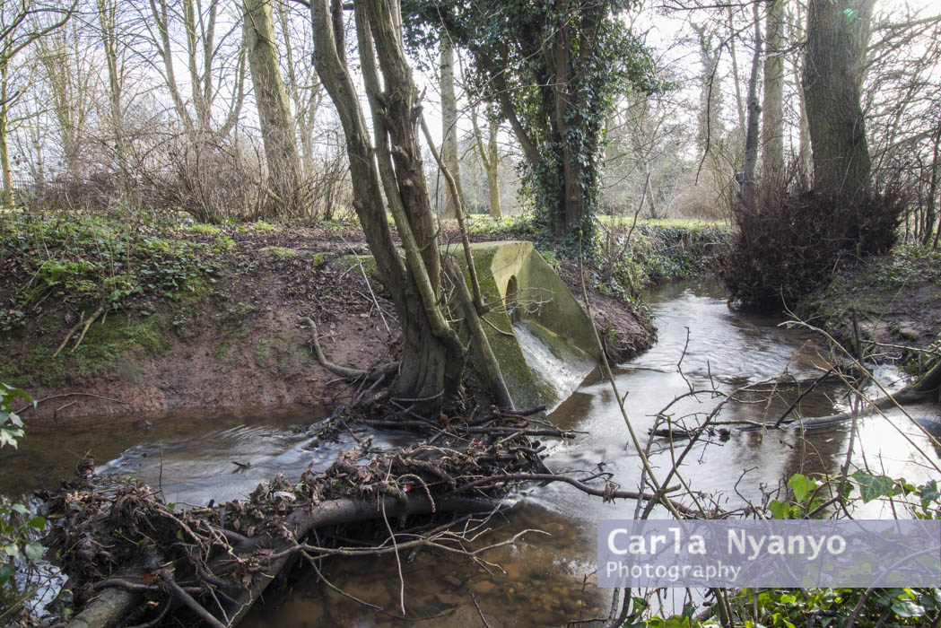 river_sherbourne-143.jpg
