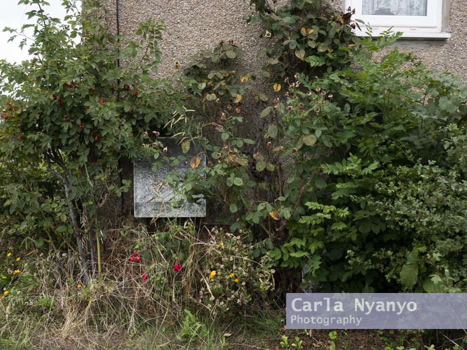 house_number_42-2.jpg