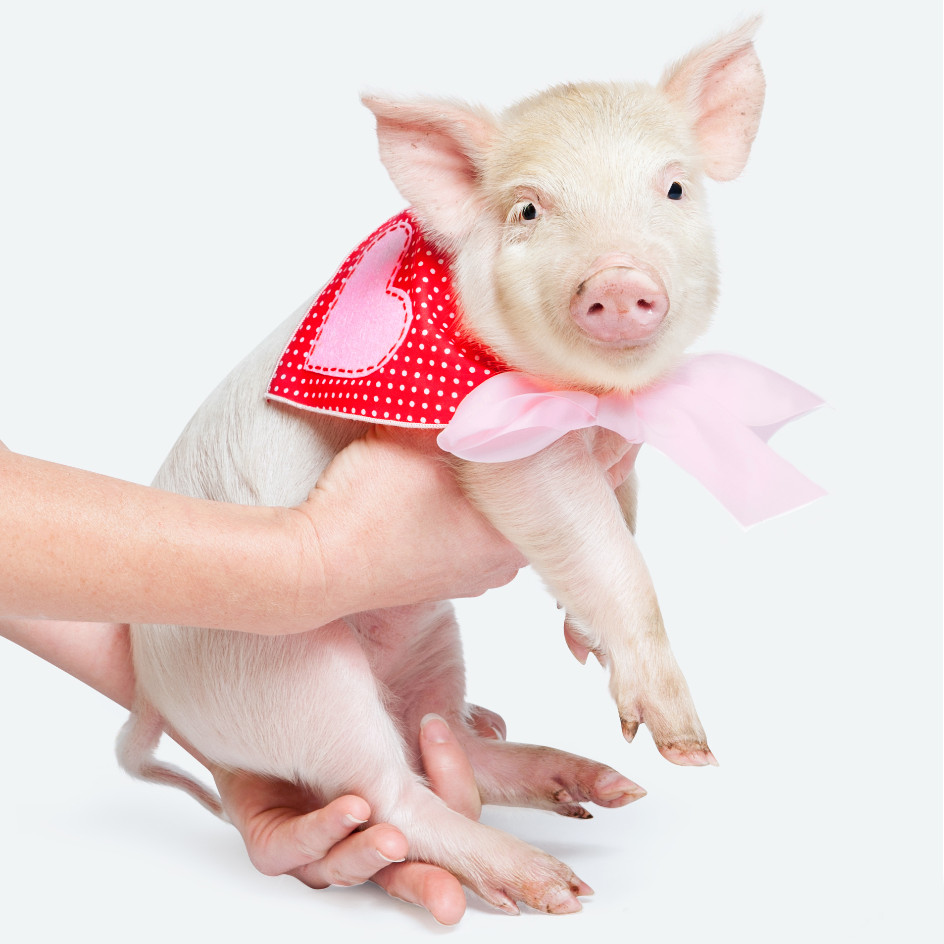 Paola-Paladini-Studio-pigglet-with-bow