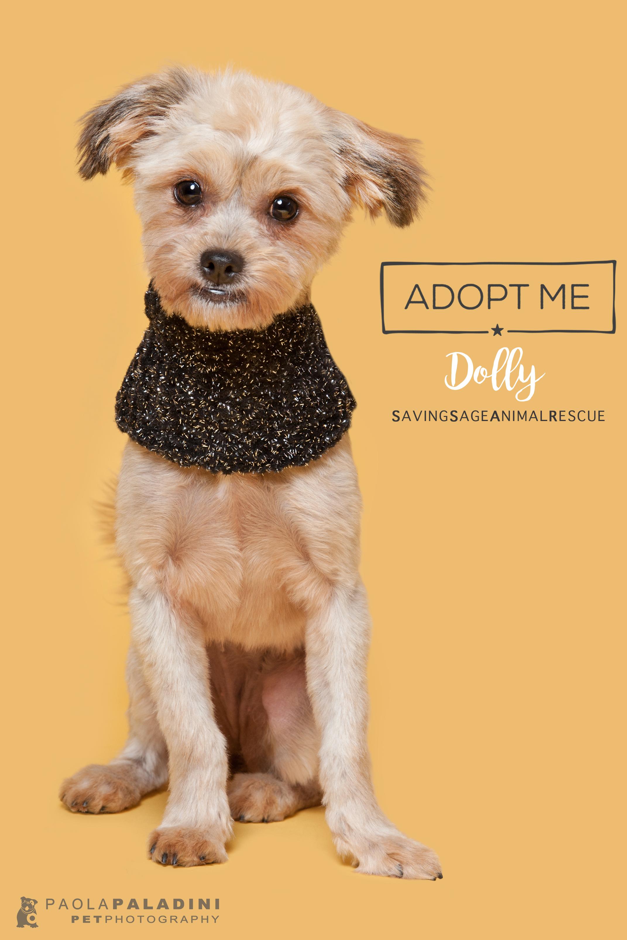 20171214-Exhibition2018-Dolly.jpg