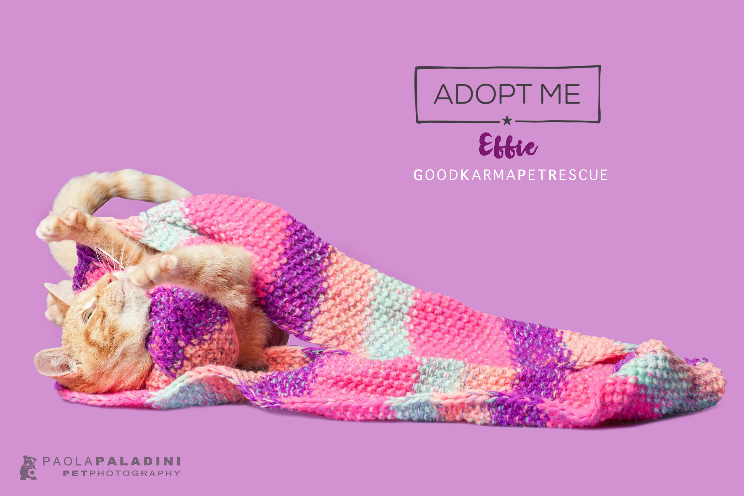 20171214-Exhibition2018-Effie.jpg