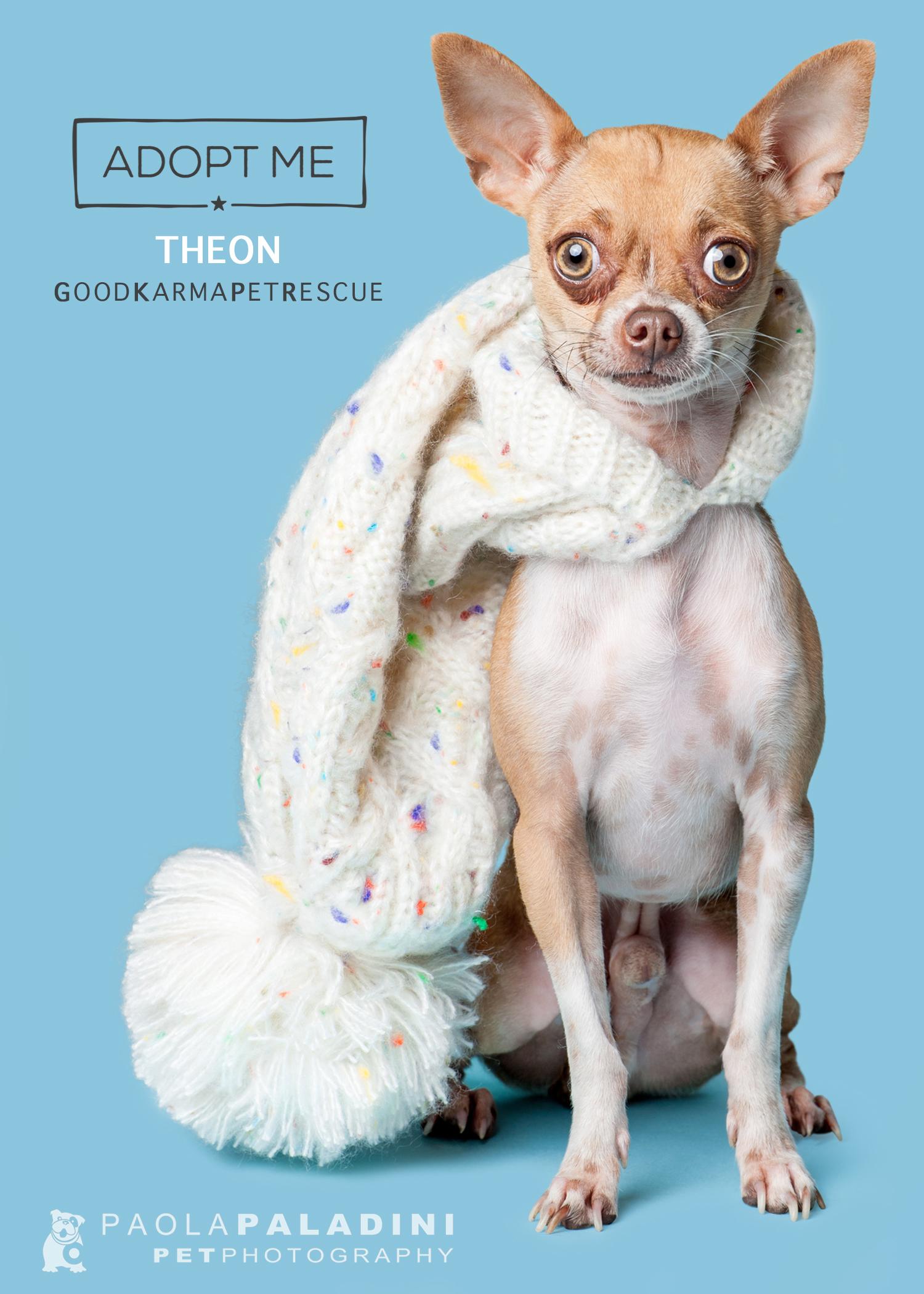 20180101-WinterExhibition-Theon.jpg