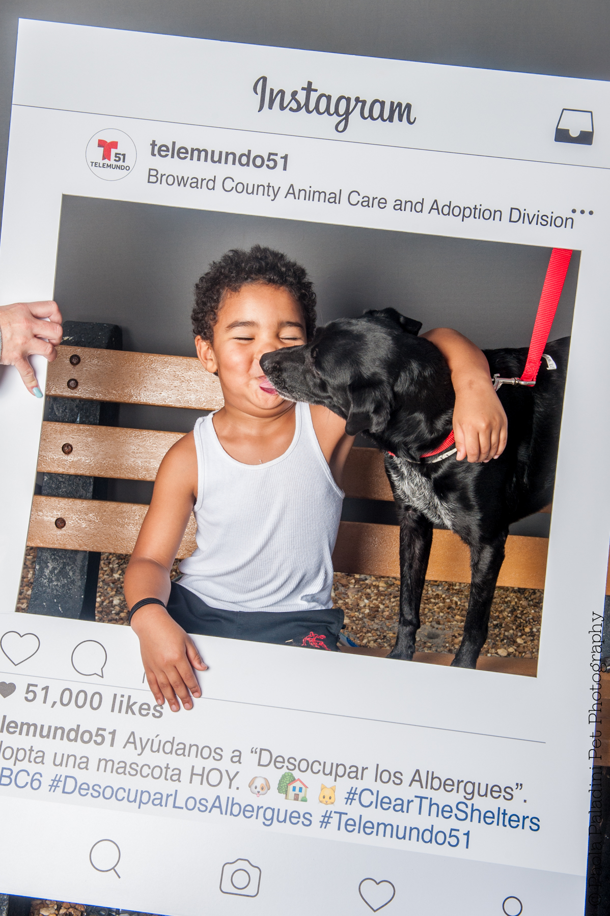 20160723-cleartheshelters-11.jpg