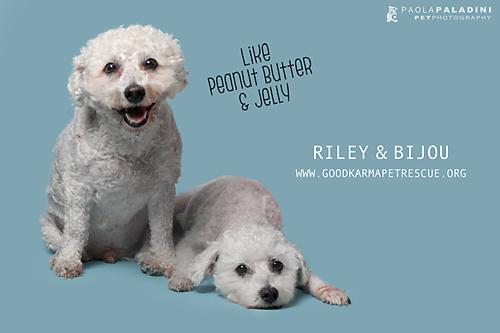 20180306-GK-Riley&Bijou-3.jpg