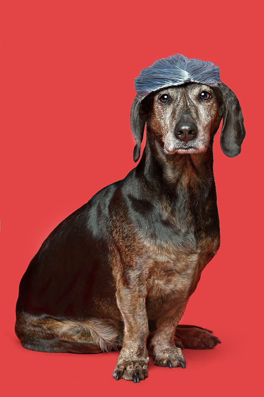 Wig-gles-dog-and-wig-dachshundmix-dog.jpg