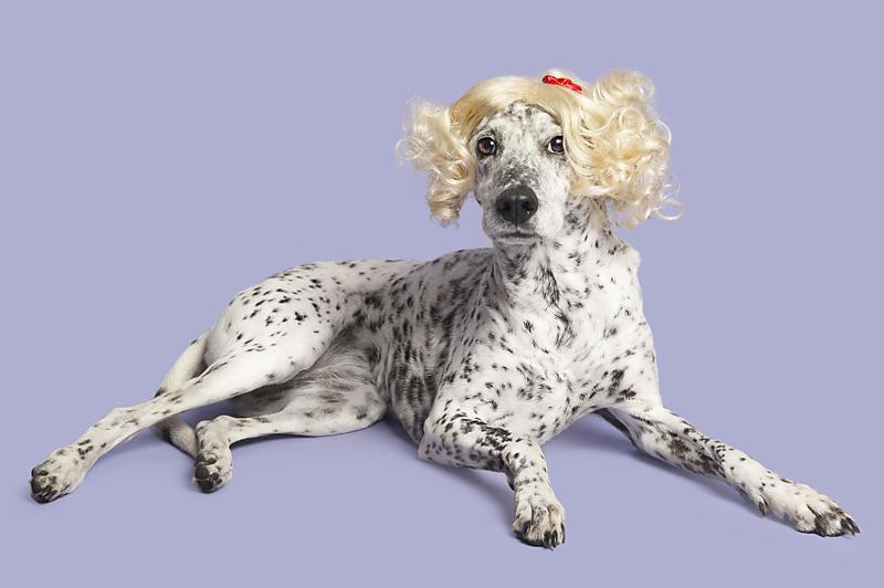 Wig-gles-dog-and-wig-dalmatian-mix.jpg