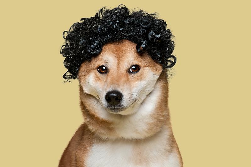 Wig-gles-dog-and-wig-shibainu-dog.jpg