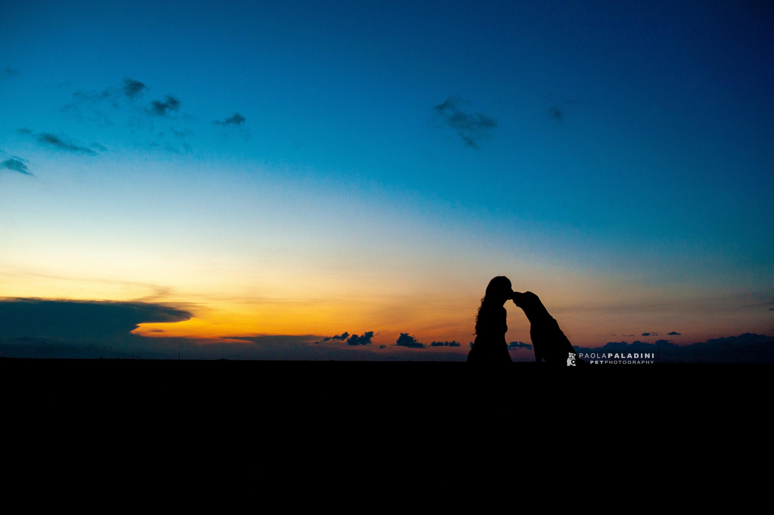 Paola-Paladini-Sunset-Silhouettes-Dog-Bloodhound-one