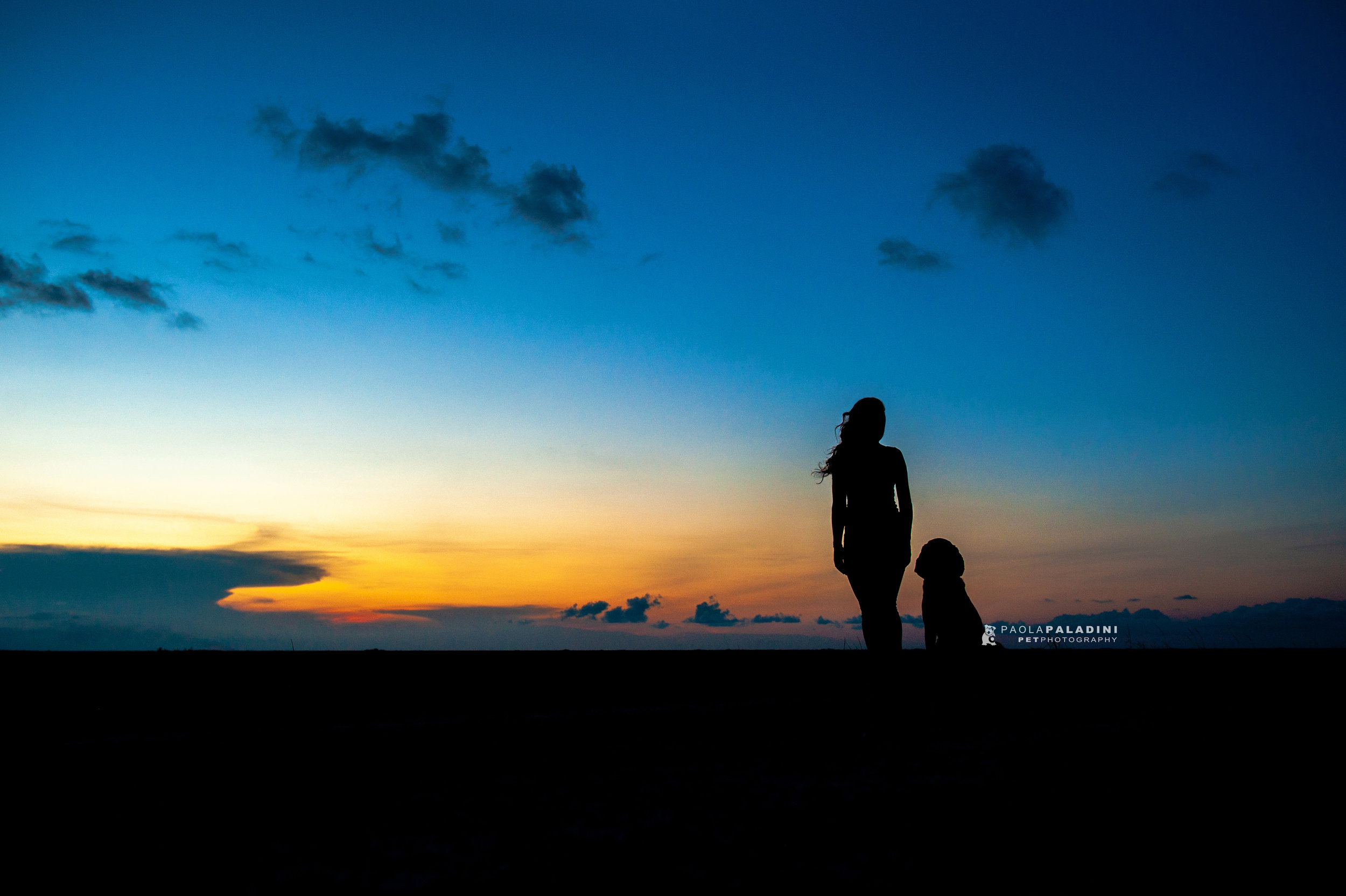 Paola-Paladini-Sunset-Silhouettes-Dog-Bloodhound-Three