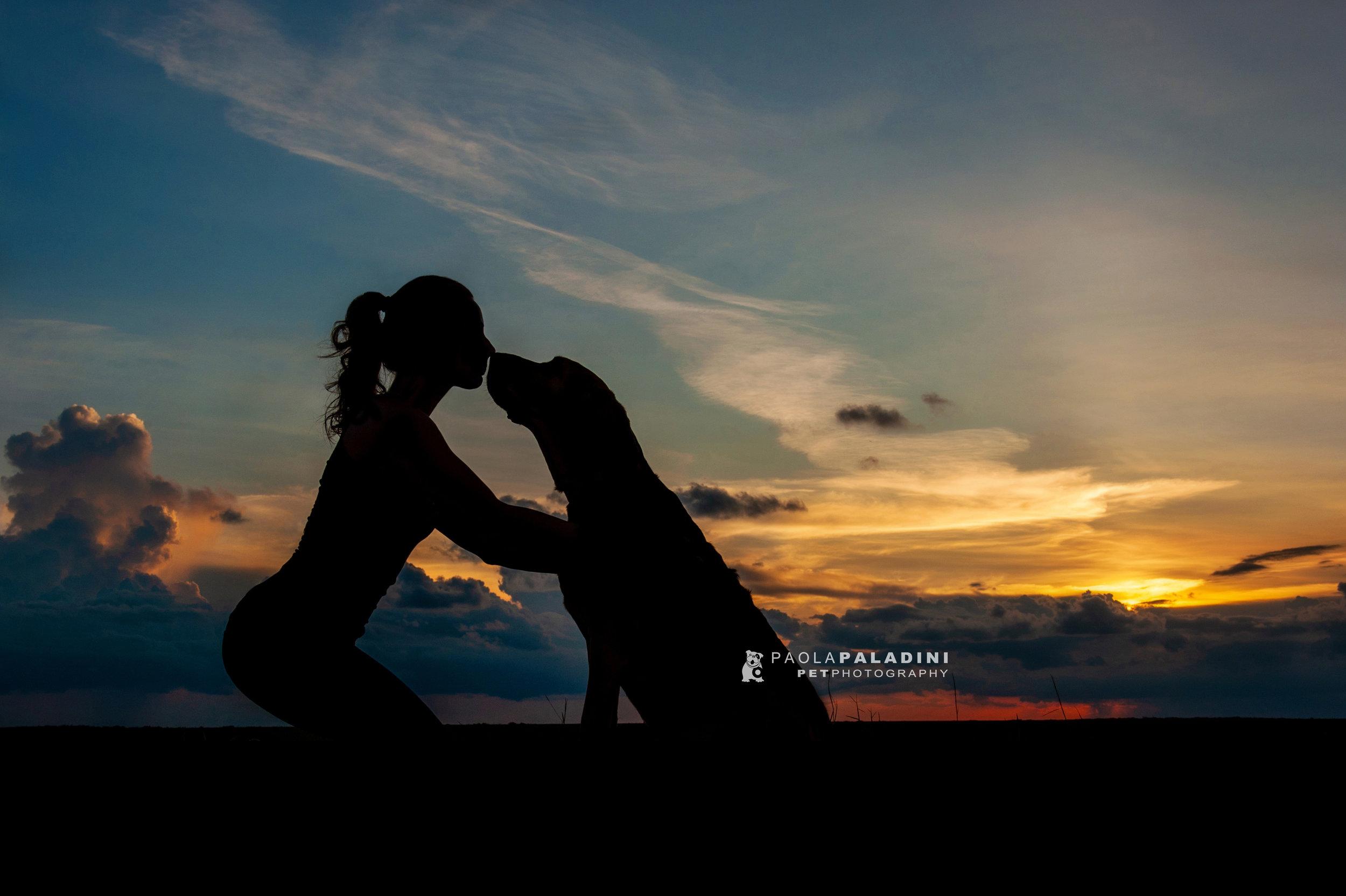 Paola-Paladini-Sunset-Silhouettes-Dog-Bloodhound-kiss