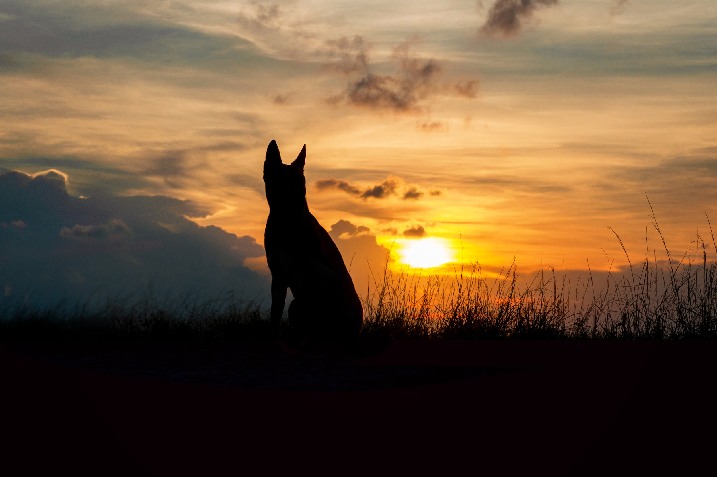 Paola-Paladini-Sunset-Silhouettes-Dog-Shepheard