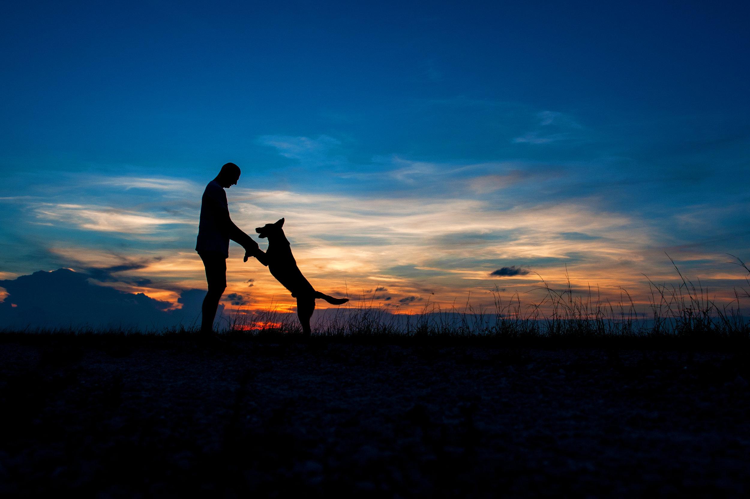 Paola-Paladini-Sunset-Silhouettes-Dog-Love
