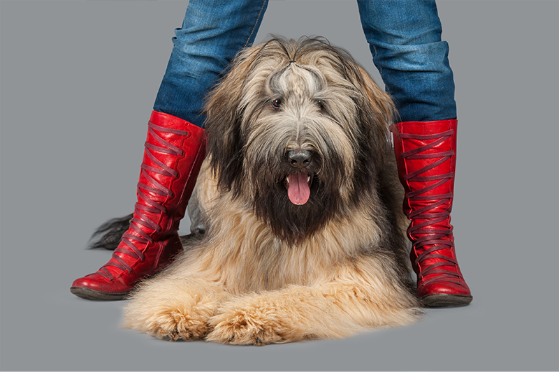 Paola-Paladini-Hounds-and-Heels-red-boots.jpg