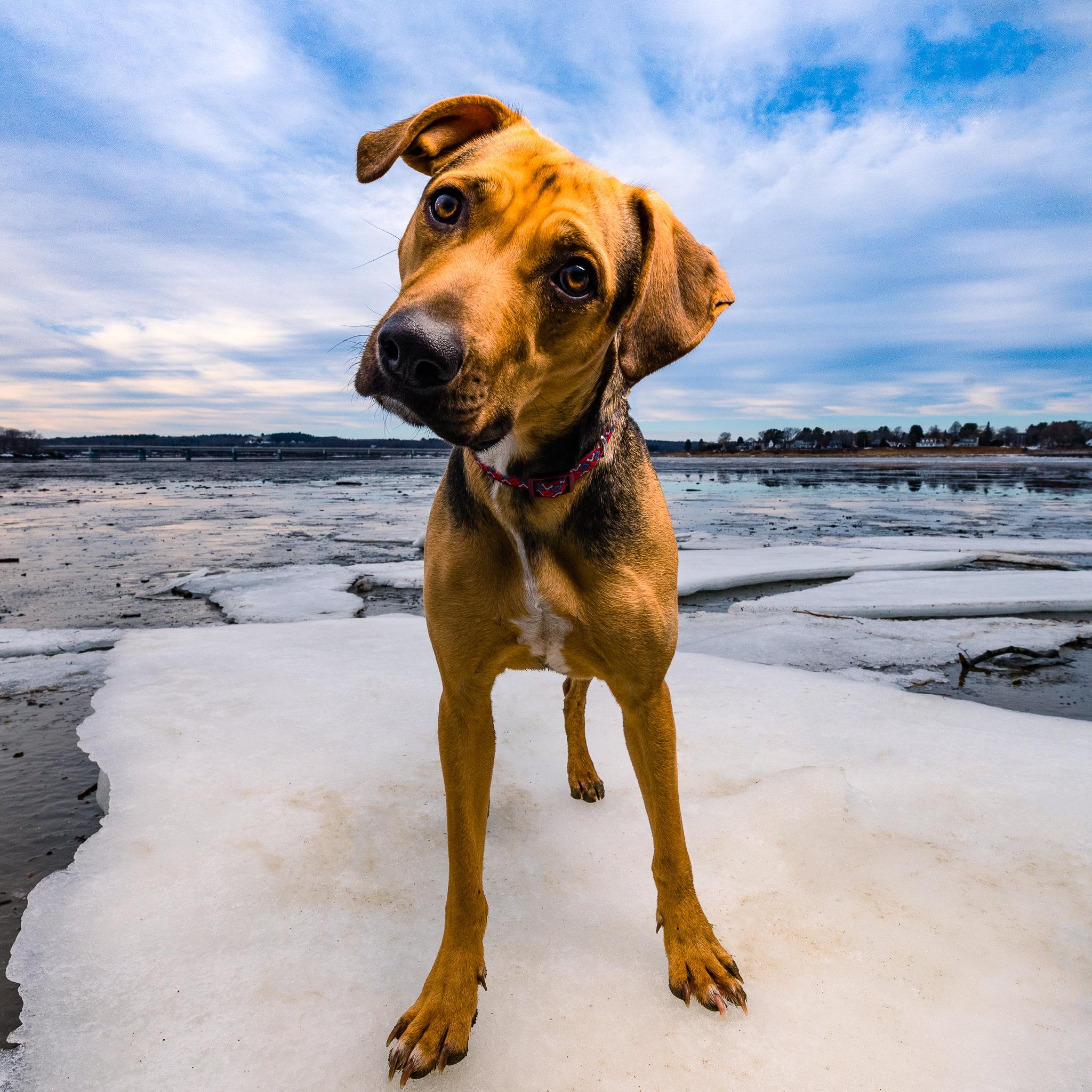 Maine Pet Photography