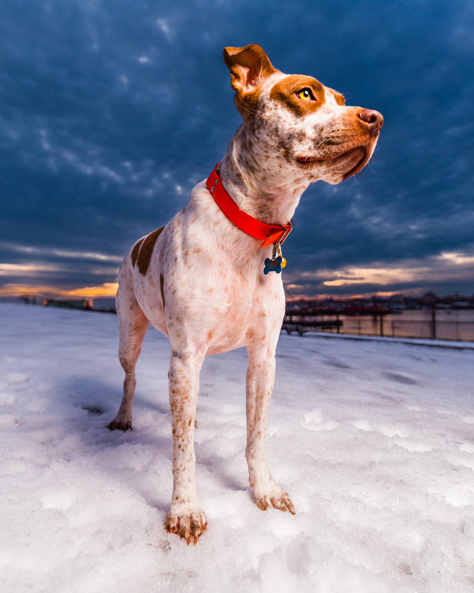 Portland, Maine pet photography | Bug Light