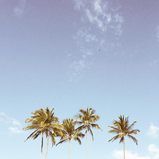Enjoying my last day of this short, sweet and super productive week in California, but ready to slow back down a little and stare at palm trees all day. 🌴🌴 #alohafriday #backtomaui